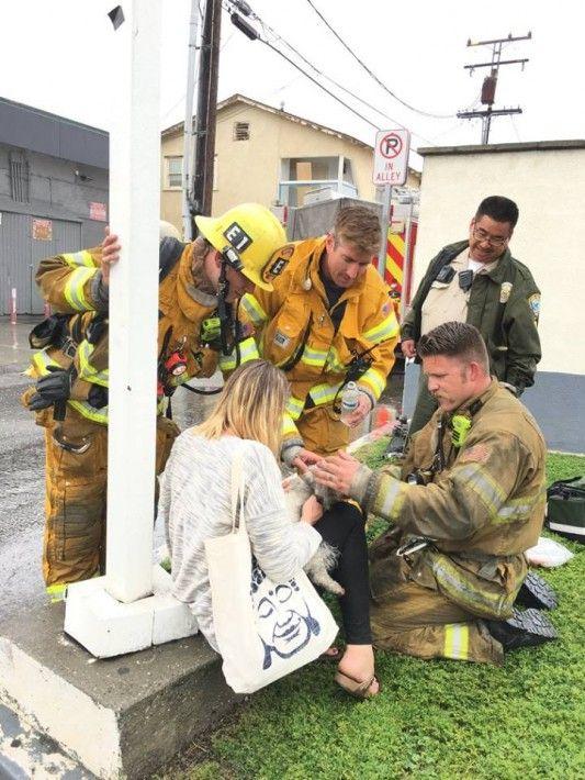犬 人工呼吸 消防士に関連した画像-05