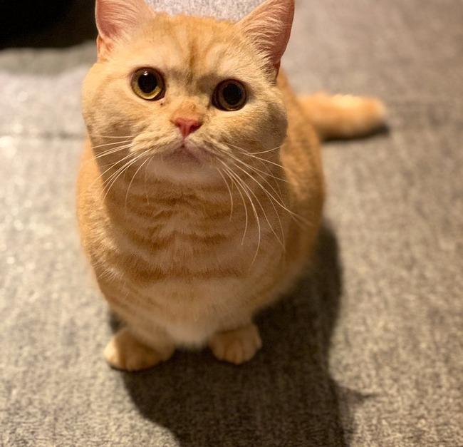 猫 殺気に関連した画像-05