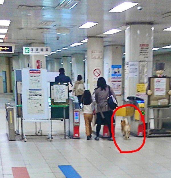 柴犬 逮捕 無賃乗車 キセル パトカーに関連した画像-02