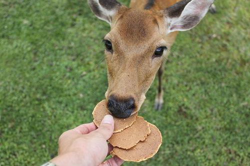 鹿に関連した画像-01