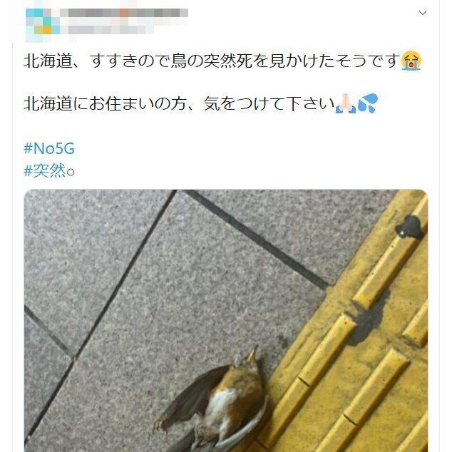 5G 鳥 突然死 電波 北海道 すすきの 推進に関連した画像-02