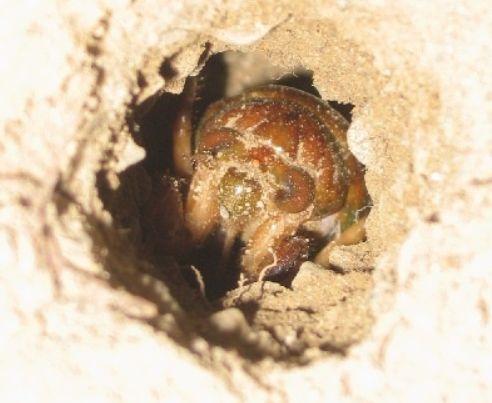 昆虫 研究家に関連した画像-06