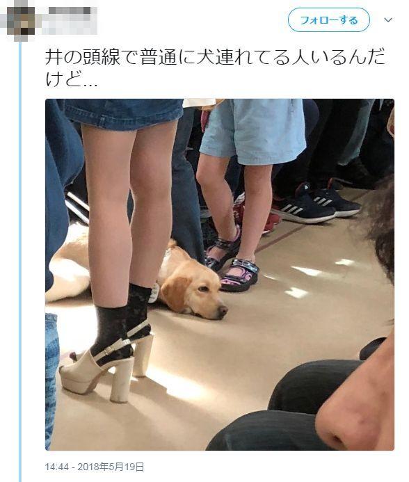 盲導犬 電車 盗撮 晒し ツイッター 中学生に関連した画像-02