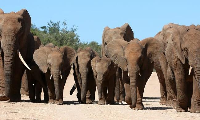 密猟者 国立公園 南アフリカ サイ ゾウ 死亡に関連した画像-01
