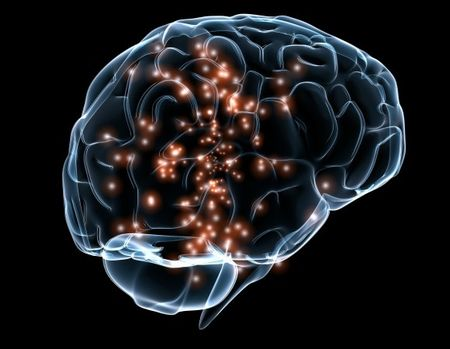 脳の培養に関連した画像-01