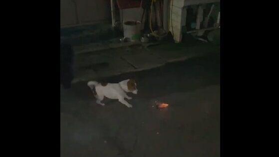海外 犬 花火 大惨事に関連した画像-01
