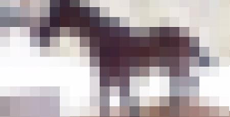 figma 馬に関連した画像-01