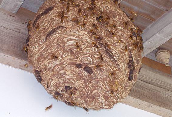 【物議】アース製薬が日本で唯一の「スズメバチの巣駆除剤」を発売するも、とある理由で批判が殺到してしまう…