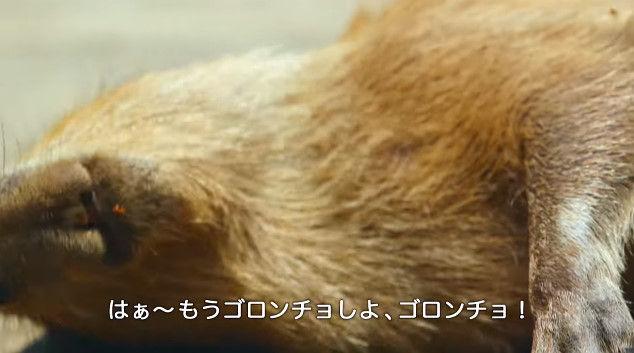 大塚明夫 声優 BL カピバラさん 動画 Youtube LIXIL MADEに関連した画像-03