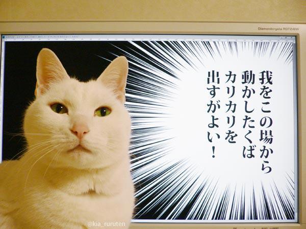 猫 モニター セリフに関連した画像-02