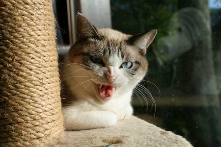 猫がキレて家に入れないに関連した画像-01