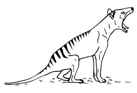 タスマニアタイガー 未公開映像 公開 フクロオオカミ