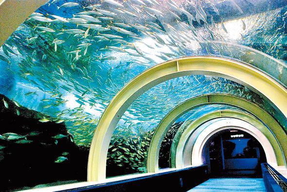 水族館 サメ 小魚に関連した画像-01