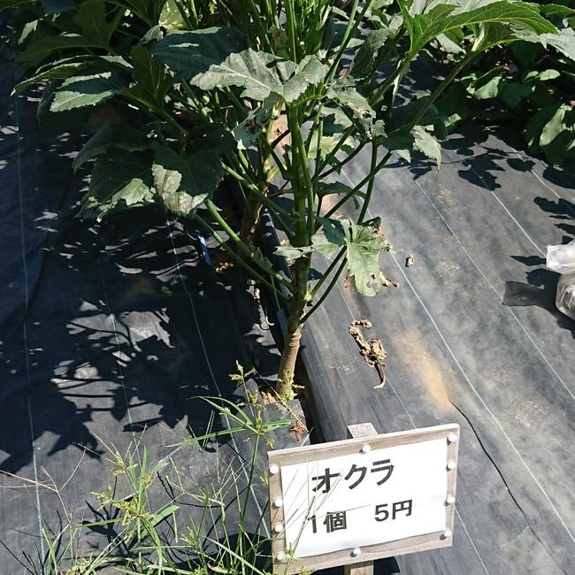 野菜 無人 直売に関連した画像-02