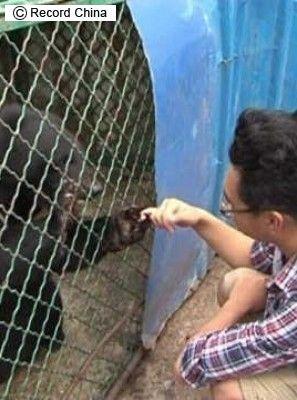 犬 熊 中国 保護動物 ペット ベトナム 愛犬に関連した画像-03