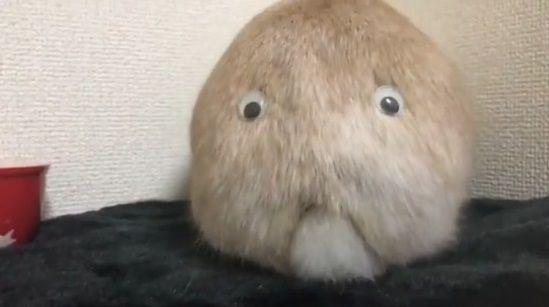 ウサギ 目ん玉 お尻に関連した画像-02