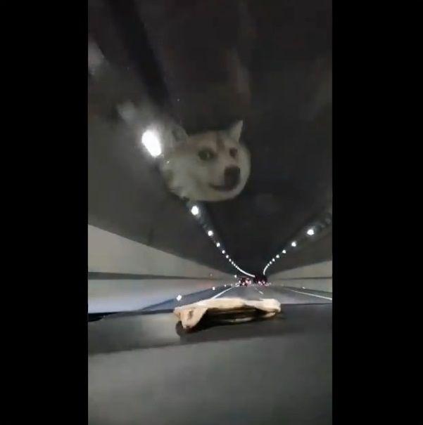 柴犬ポーチ ダッシュボード HUDに関連した画像-08