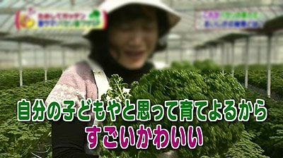 パセリ 捨てられる 農家に関連した画像-02