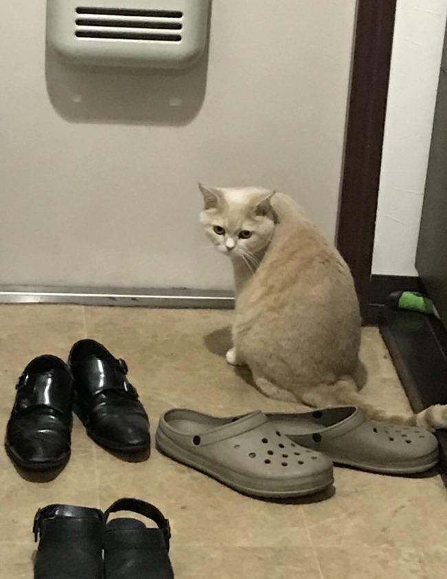 猫 可愛い 反応に関連した画像-04