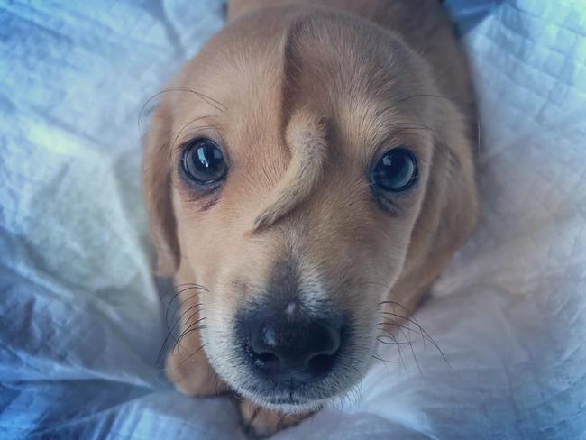 子犬 額 しっぽに関連した画像-04