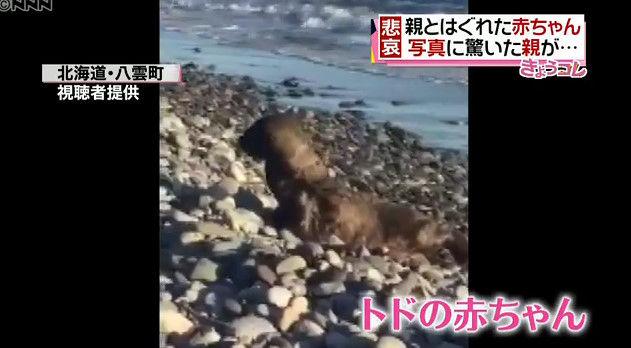 北海道 野性 トド カメラ スマホ 撮影に関連した画像-01