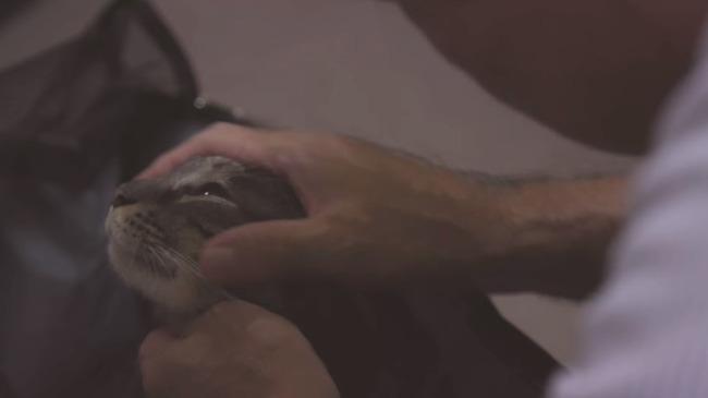 猫 かるかん 声 病気に関連した画像-18