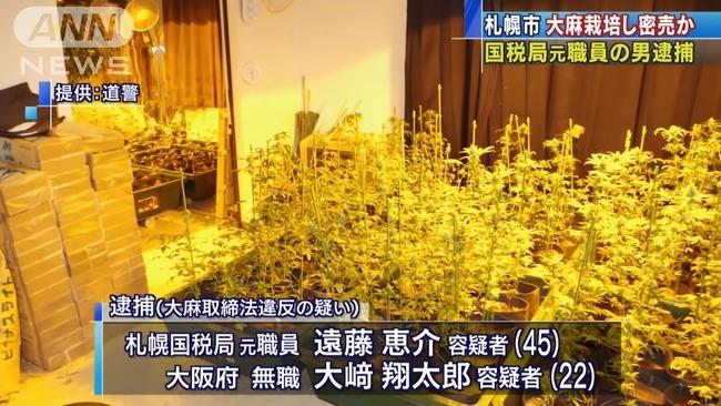 元国税職員 大麻密売 栽培に関連した画像-05