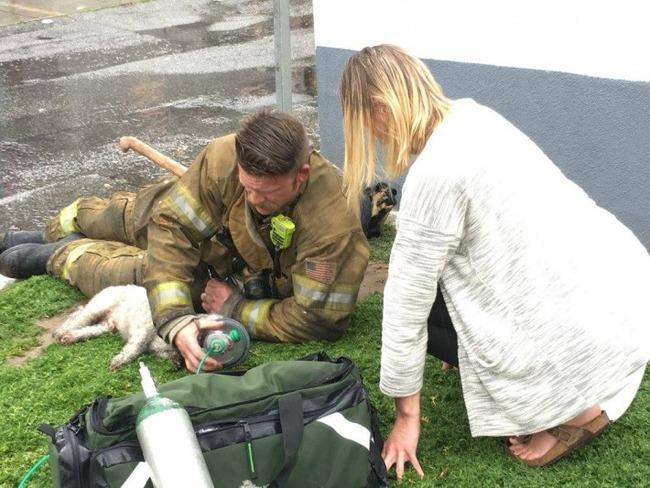 犬 人工呼吸 消防士に関連した画像-03