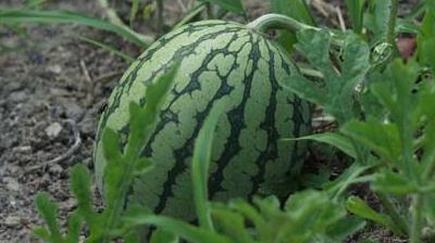 農作物 盗難 泥棒 検挙率に関連した画像-01