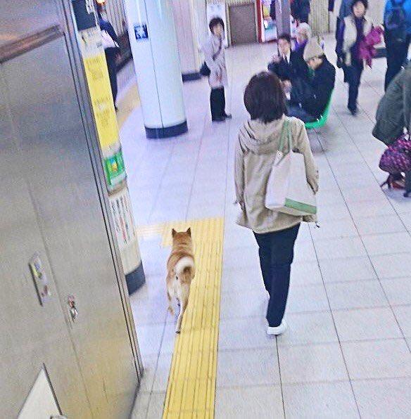 柴犬 逮捕 無賃乗車 キセル パトカーに関連した画像-03