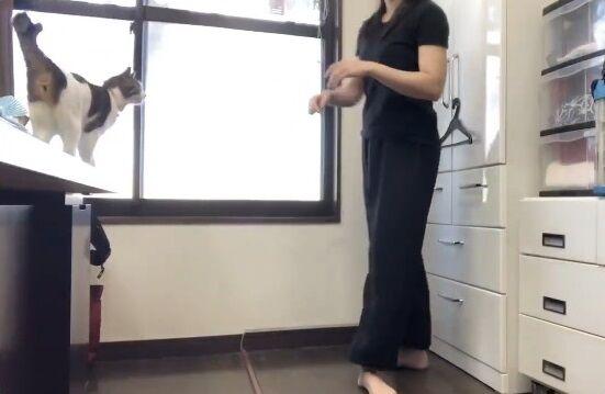 蹴り解説動画 猫乱入 癒やしに関連した画像-04