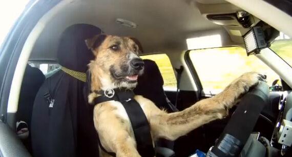 アメリカ カーチェイス 犬 逮捕に関連した画像-01