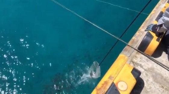 釣り客 観光客 八丈島 ムロアジに関連した画像-02