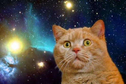 ネコ 進撃の巨人に関連した画像-01
