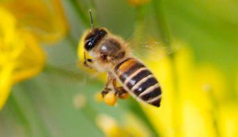 ミツバチ 殺虫剤 養蜂家に関連した画像-01
