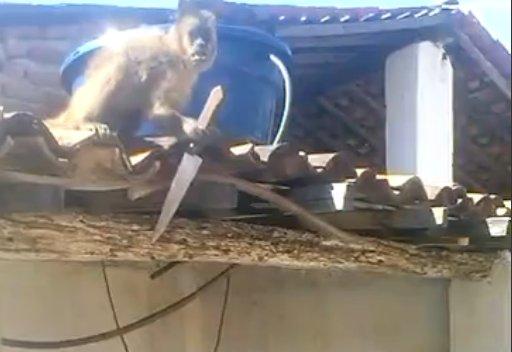 酔っ払った 猿 包丁に関連した画像-02