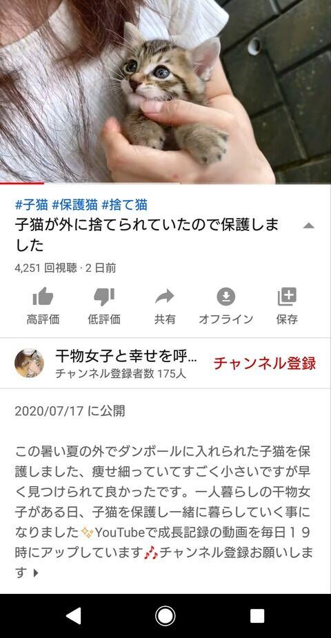 動物 YouTuber 猫 自演に関連した画像-04