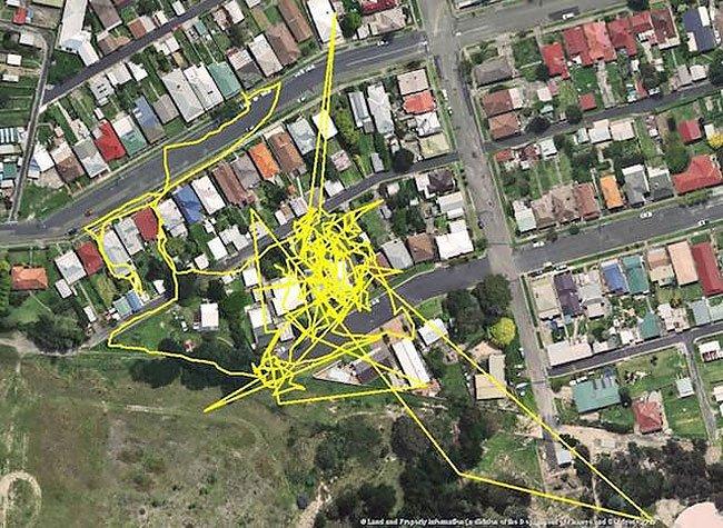夜間 ネコ 猫 距離 移動 GPS 広範囲 帰巣本能 本能に関連した画像-03