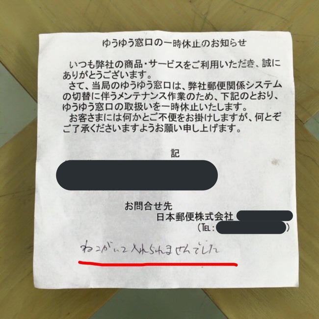 猫 郵便物 郵便受けに関連した画像-02
