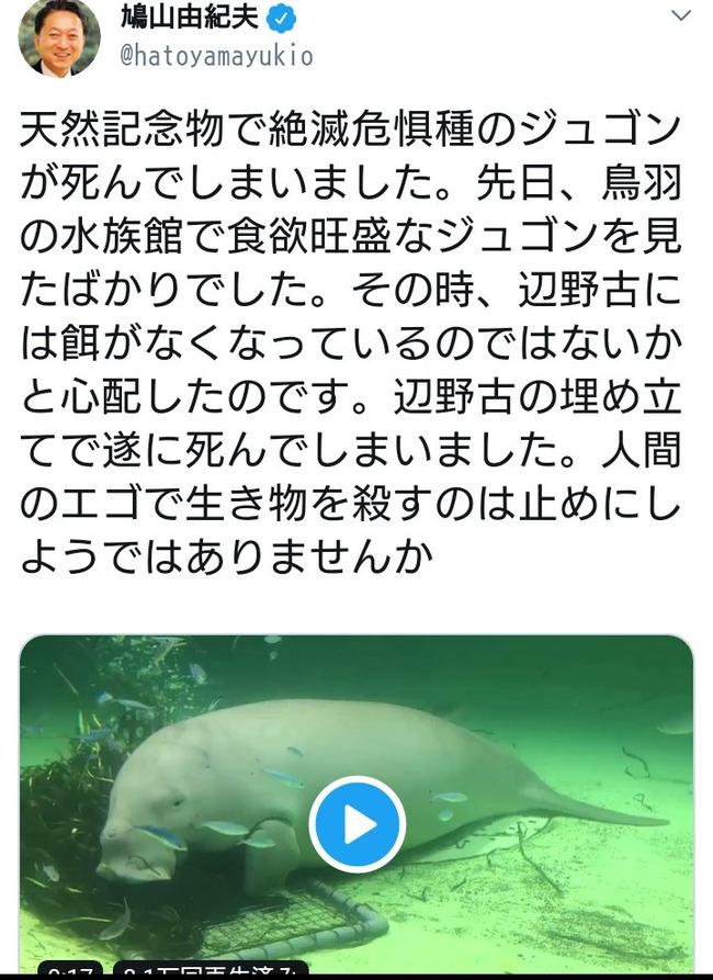 沖縄 辺野古 ジュゴン 死因 エイ 埋め立て 捏造に関連した画像-07