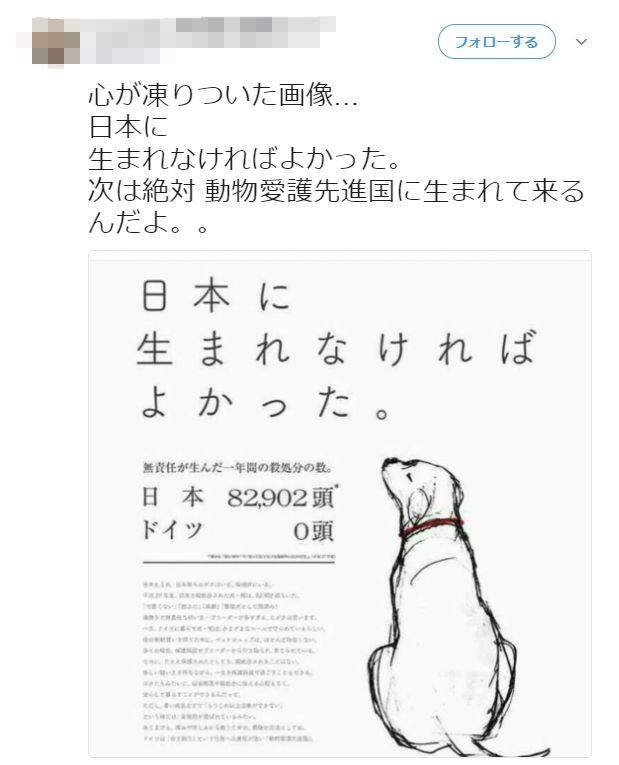 犬 ドイツ 殺処分 保健所に関連した画像-02