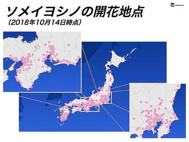 桜 開花 全国的に関連した画像-03