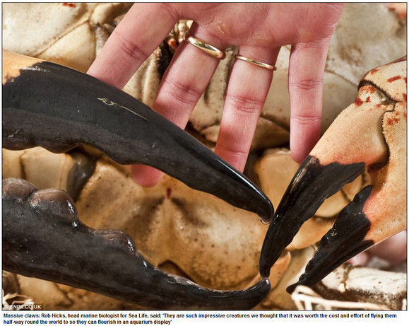 crab-monster5n
