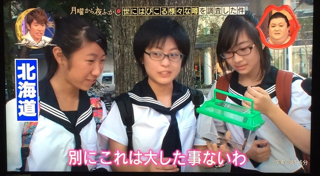ゴキブリ 北海道民 反応に関連した画像-03