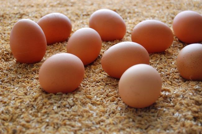 トム・ホランド 新型コロナウイルス 卵 買い占め ニワトリに関連した画像-01