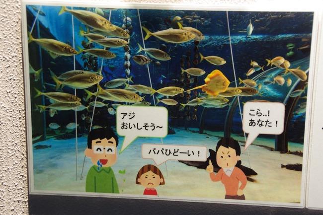 水族館 魚 浅虫水族館に関連した画像-03