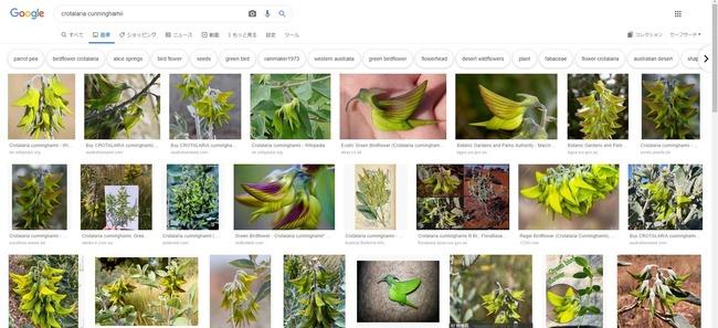オーストラリア 花 ハチドリに関連した画像-04