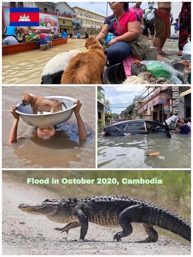 カンボジア人 強メンタル 洪水 ワニに関連した画像-04