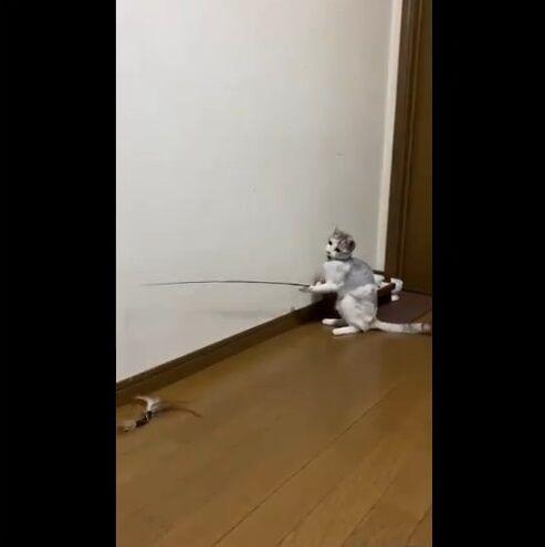 猫 猫じゃらし 一人遊びに関連した画像-03