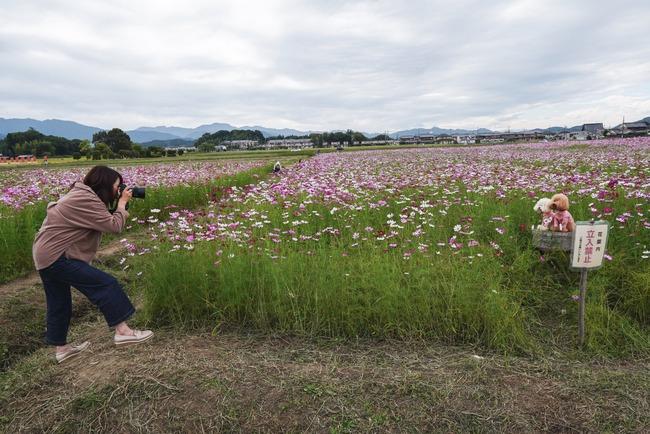犬 インスタ 写真 ツイッター 炎上 花畑 立入禁止に関連した画像-04